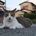 Photos: 近所のニャンコ