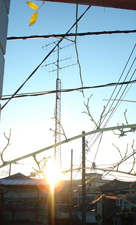モッコウバラと朝陽~(⌒~⌒)