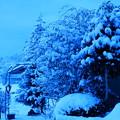 春の淡雪と~①