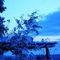 春の淡雪と~②