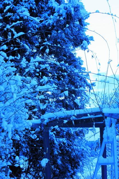春の淡雪と~(3)