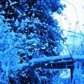 春の淡雪と~③