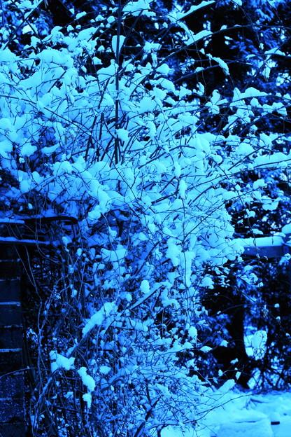 春の淡雪と~(4)