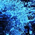 春の淡雪と~④