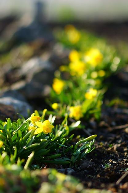 春の野原風