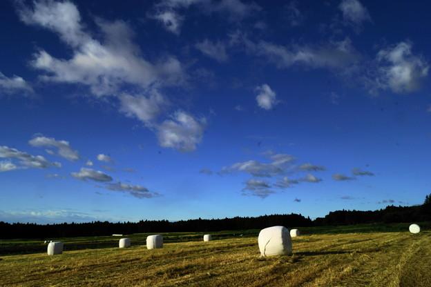 写真: 干し草ロール