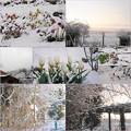Photos: 4月の雪