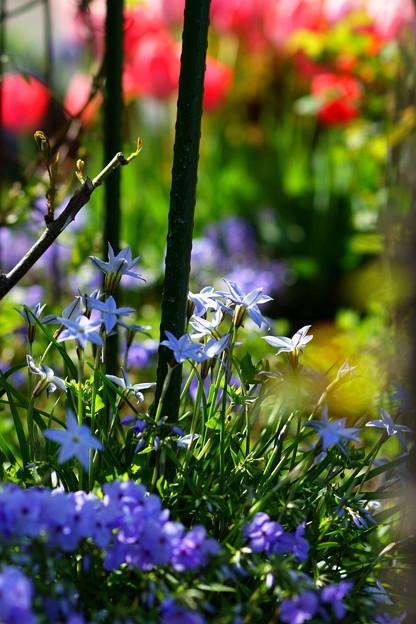 Photos: 今日の庭4/28