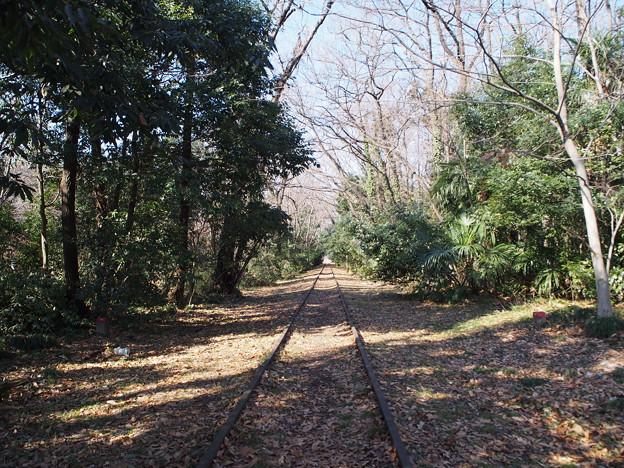 Photos: 線路の森