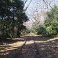 写真: 線路の森