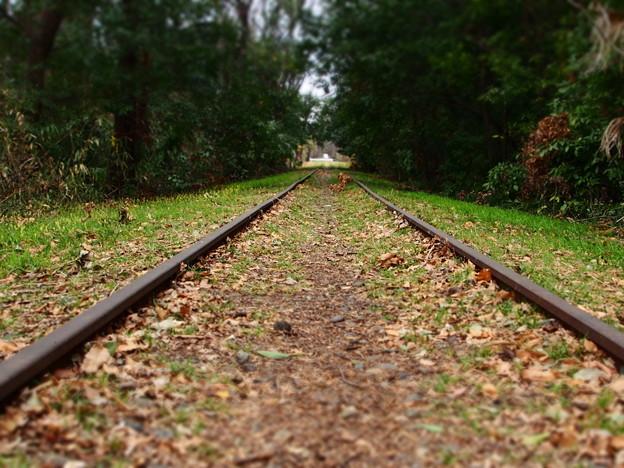 線路の森2