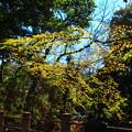 写真: 光を浴びて新芽が芽吹く