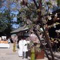 Photos: 川越 氷川神社2