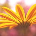 Photos: 春の光を浴びて