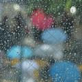 Photos: 傘の花