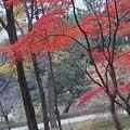 Photos: 絵になる #皇居 #二の丸庭園