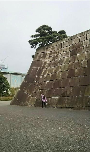 今週も皇居  #松 #素敵世界