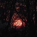 写真: 春の落日
