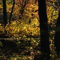 写真: 森の輝き 1