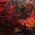写真: 森の輝き 3