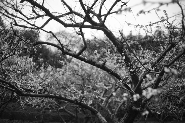 Photos: 不安な季節