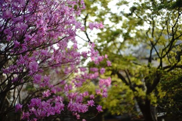 Photos: 春があふれている