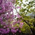 春があふれている