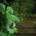 Photos: 湿度たっぷり