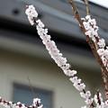 写真: いよいよ春