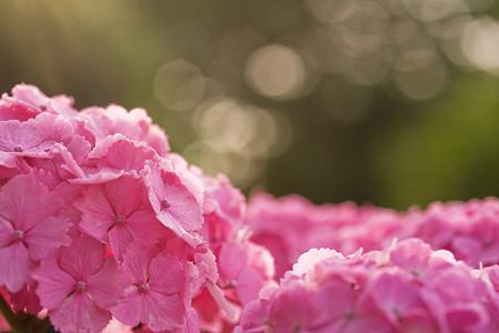 ピンクな朝