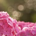 写真: ピンクな朝