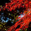 写真: 多摩川台公園の紅葉
