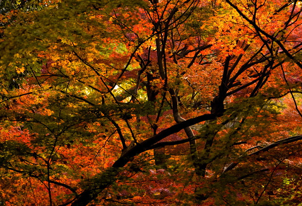 日射しと紅葉