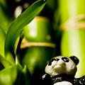 写真: パンダとバンブー