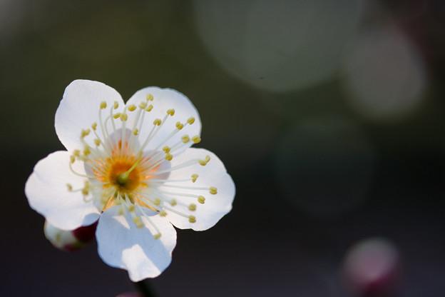 Photos: 初春の朝