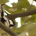 Photos: 猿の中に小鳥