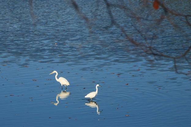 Photos: 白鷺と秋~♪