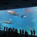 Photos: 美ら海水族館~♪
