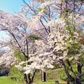 Photos: 江別 大麻西公園