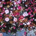 写真: 花の舞
