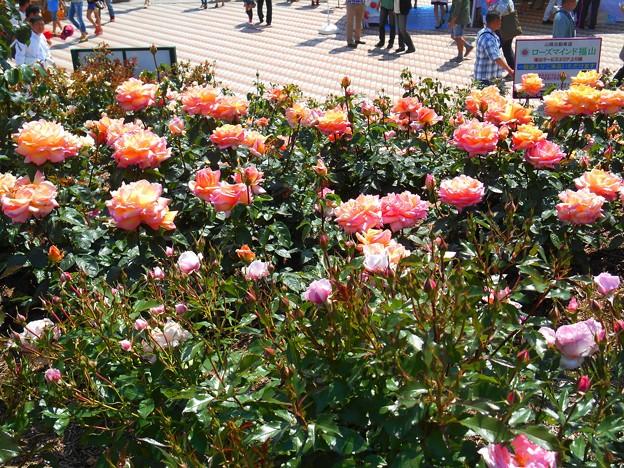 ローズマインドな緑町の薔薇たち♪