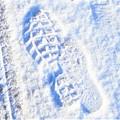 Photos: 雪国でない国の@雪の朝@親子連れ@積雪2cm