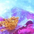 写真: 立春の寒い朝@サザンカの花