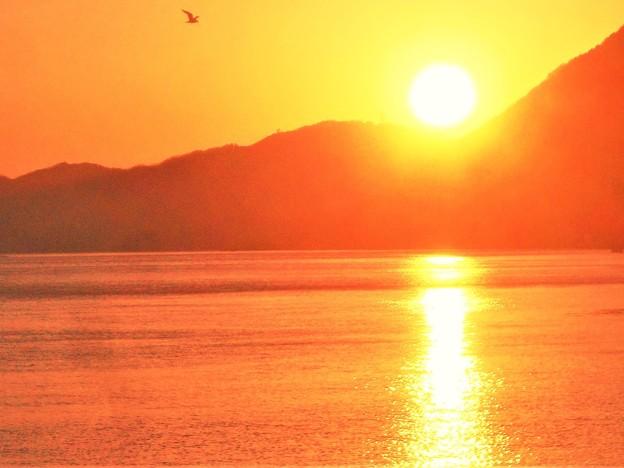 写真: 燧灘の静かな海と一羽のカモメ@二月の夕陽