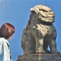 写真: 筋金入りの 貫禄のある狛犬@市庁舎前@左は通行人