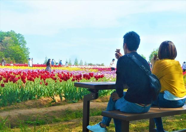 GWのチューリップ畑は花盛り@広島・世羅高原