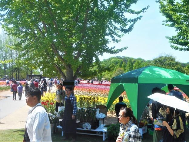 立夏の世羅高原@チューリップ祭2018@五月晴れのこどもの日