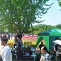 写真: 立夏の世羅高原@チューリップ祭2018@五月晴れのこどもの日