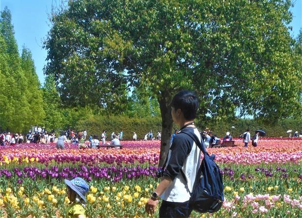 GW・こどもの日の世羅高原@立夏のチューリップ畑