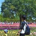 写真: GW・こどもの日の世羅高原@立夏のチューリップ畑